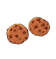 Chocolate chip cookies isolate on white background vector