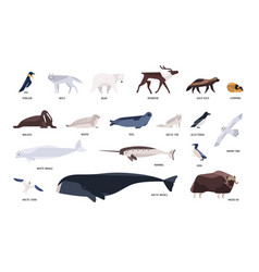 collection of cute polar animals birds marine vector image