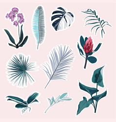 set tropical protea orhid flowers leaves vector image