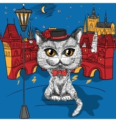 Cat in Prague Prague Castle and Charles Bridge vector image vector image