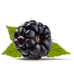 dewberries blackberries vector image vector image