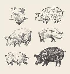 drawn pigs scheme pork cuts restaurant menu vector image