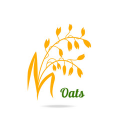 Oat ears hand drawn isolated vector