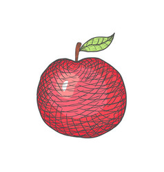 hand drawn engraved apple on white vector image