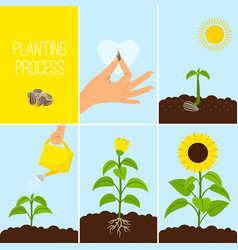 Flower planting process vector