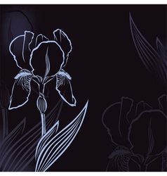 Iris background vector