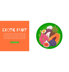 tropical exotic fruit cartoon vector image