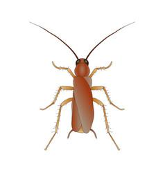 blattella germanica cockroach sketch of vector image vector image
