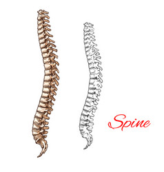 sketch icon of human spine bones or joints vector image