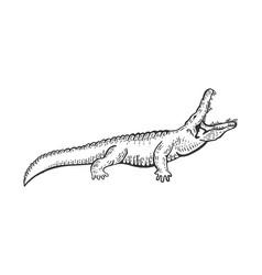 Alligator crocodile sketch engraving vector