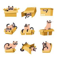 Cat playing with box isolated icons pet or vector
