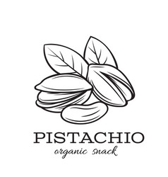 Hand drawn pistachio nuts vector