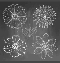 hand drawn vintage floral elements on blackboard vector image