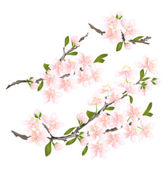sakura cherry twigs pink flower with leaves vector image