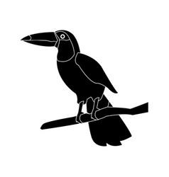Toucan bird animal cartoon icon image vector
