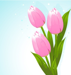Bunch of tulips vector image