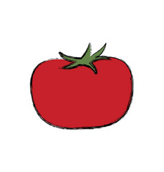 Tomato vegetable nutrition food fresh product vector