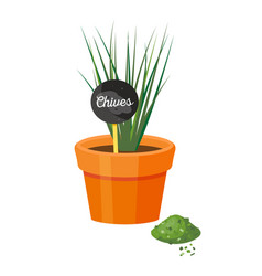 chives in pot and table powder vector image