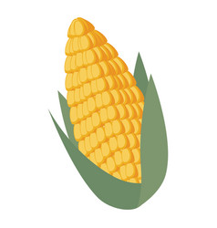 corn fresh isolated icon vector image