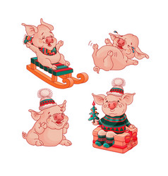 set of isolated pigs cartoon style vector image