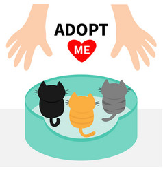 three kittens looking up to human hand cat bed vector image