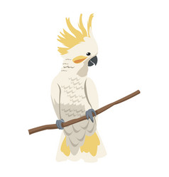 cockatoo bird icon vector image vector image