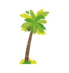 stylized flat style cartoon coconut palm tree vector image vector image