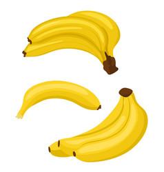 banana set bunches of fresh banana fruits and vector image