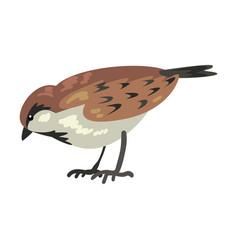 Cute sparrow winter bird beautiful northern vector