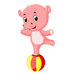 a baby circus hippo balancing on a big ball vector image