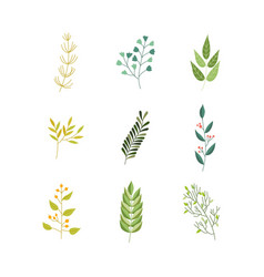 Flat abstract green plant icon vector