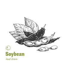 Soybean hand drawn set vector