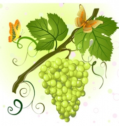 branch of grapes vector image