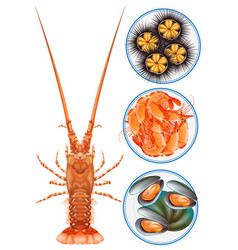 Four kinds of seafood on plate vector