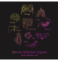 human internals doodle set vintage vector image