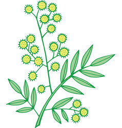 mimosa branch isolated doodle and cartoon floral vector image
