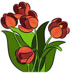 Tulip flowers vector