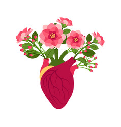 anatomical pink doodle heart with flowers vector image