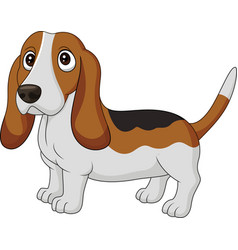 cartoon dog basset hound isolated on white backgro vector image