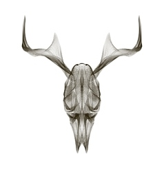 Deer skull 3d style for print tattoo t vector image