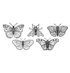drawing butterflies vector image