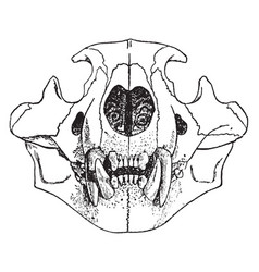 Lion skull vintage vector