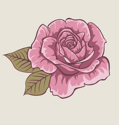 red rose isolated flower on gray background vector image