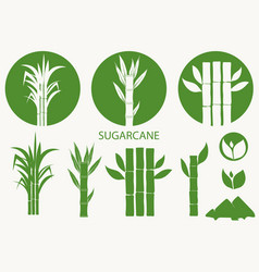 Sugar cane set cane plant sugarcane harvest vector