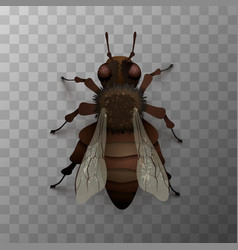 detailed realistic fly insect on transparent vector image