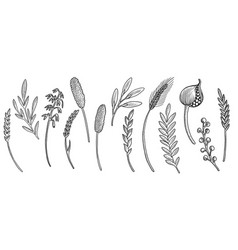 drawing floral elements vector image