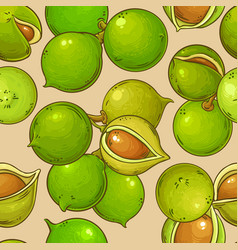 macadamia nuts pattern on color background vector image