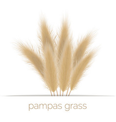 Pampas golden grass copy space on stripe vector