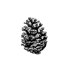 pine cone hand drawn design vector image