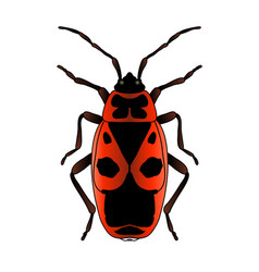 pyrrhocoris apterus beetle bug-soldier sketch vector image
